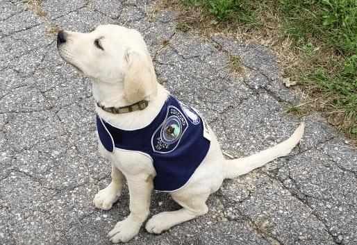 liberty comfort dog